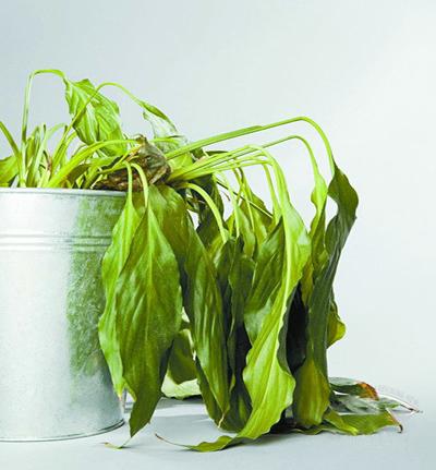 盆景 盆栽 植物 400_431