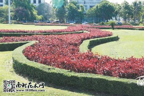 壁纸 成片种植 风景 植物 种植基地 桌面 467_311