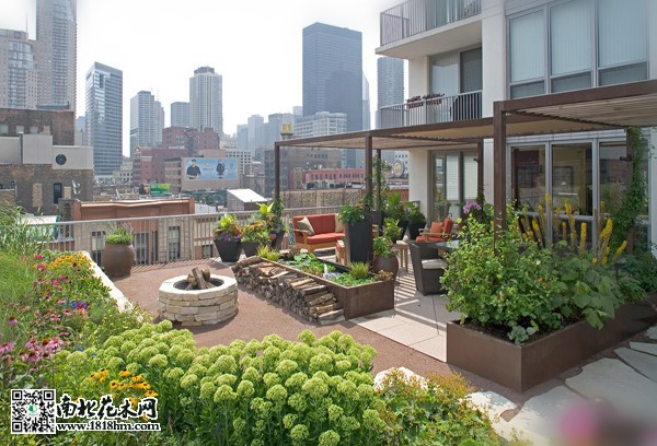 建造屋顶花园,如何挑选适合的植物