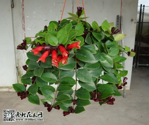 手工花朵制作方法图解最筒单