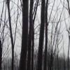 1.2.3.4.5.公分优质楸树、大量当年梓树苗