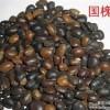 供应国槐籽,杜梨籽,栾树籽,桃核,杏核,白皮松籽