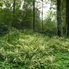 菲白竹 供应 批发园林景观观赏竹子 菲白竹
