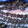 垂柳插穗绿化树苗黑龙江李红18745517183