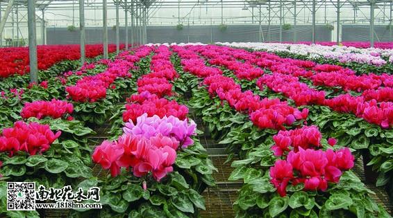 从花卉苗木销售看,全县约2.