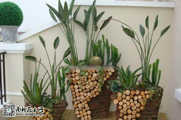 室内摆放绿色植物有什么好处?