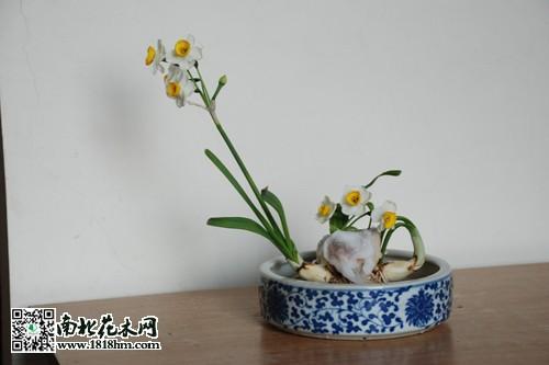 水仙花养殖小知识