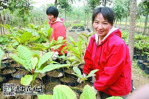 李青青花木种植