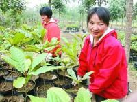 李青青花木种植的发家致富路