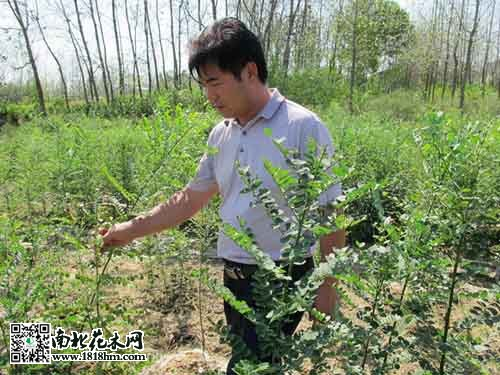 597亩苗木