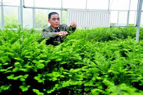 中山苗木种植户