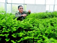 中山苗木种植大户年收入数百万