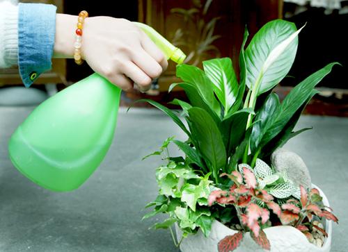 家庭盆栽花卉浇水方法