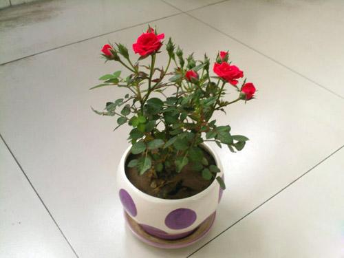 盆栽花浇水简笔画
