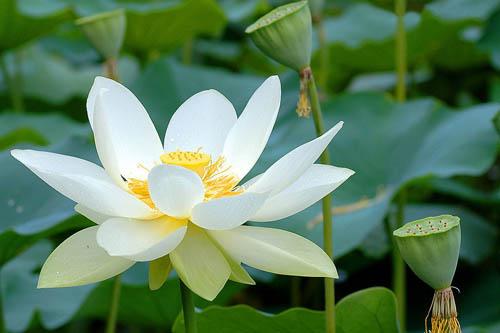 佛学禅意图片唯美莲花展示图片
