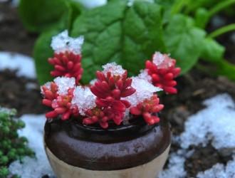 冬季多肉植物的选择和养护方法