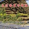 出售草坪草籽|草坪草籽价格|河北四季青草籽价格