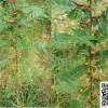 产刺量大皂角树苗供应
