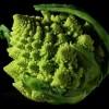 宝塔菜种子