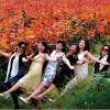 上海批发直销彩叶树木红霞杨, 行道树,工程绿化苗木