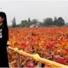 彩色乡村旅游景点,红霞杨景区开创乡村旅游示范景点