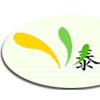 皂角树大量供应十万棵