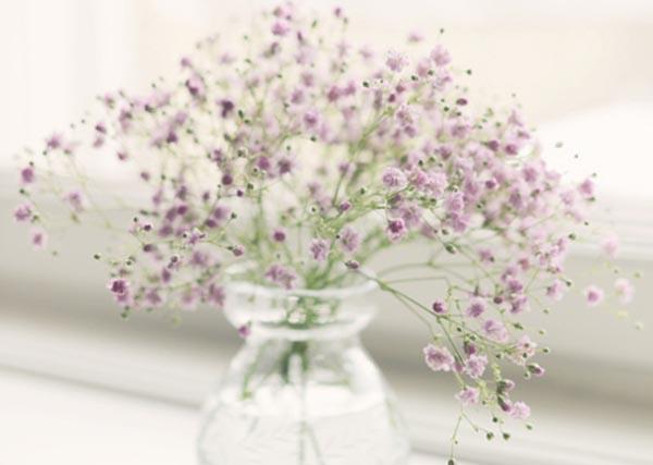 盆栽满天星花怎么养 绿植满天星种子的养殖方法