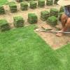 贵州绿化草坪~贵州草皮价格~贵州马尼拉草皮