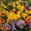 供应LVXIN牌野花组合种子
