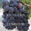 浙江葡萄苗种植过程中土壤含水量尤为重要