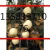 山东矮化苹果苗,矮化苹果苗,烟富0苹果苗,维纳斯黄金苹果苗