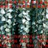 107杨树苗多少钱一棵/杨树苗价格