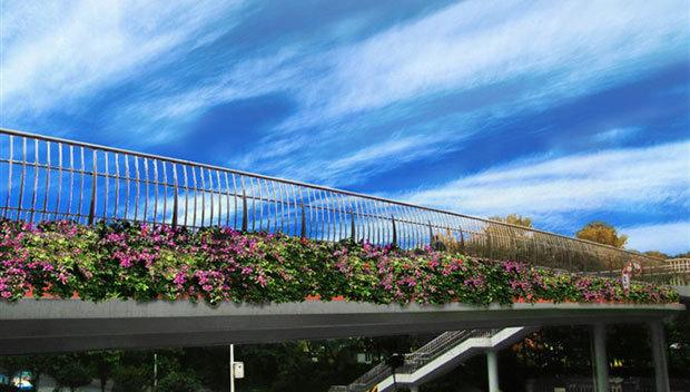 郑州高架桥未实施立体绿化,一方面是缺乏科学完善的高架桥规划设计,另