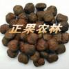 专业供应进口精选油桐种子