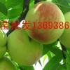 贵州桃树苗批发13693869352 桃树苗批发基桃树苗批发