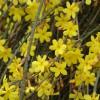 迎春、花石榴、黄刺玫、五角枫、金丝桃、紫叶李、杜鹃、河南桧柏