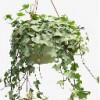 贵阳绿色植物长租,贵阳绿色植物长租经销商,隆盛供