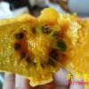 商龙特色水果九月黄金蕉种子种苗
