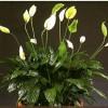 贵阳室内植物长租,隆盛供,贵阳室内植物长租厂家地址