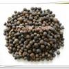 供应油茶籽