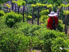 江苏:防疫生产两不误 苗木保供出实招